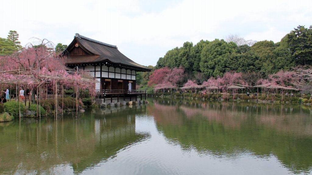 heian-jingu sakura