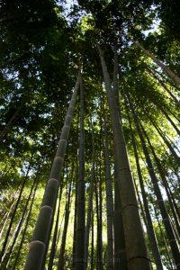 bamboo_enkoji