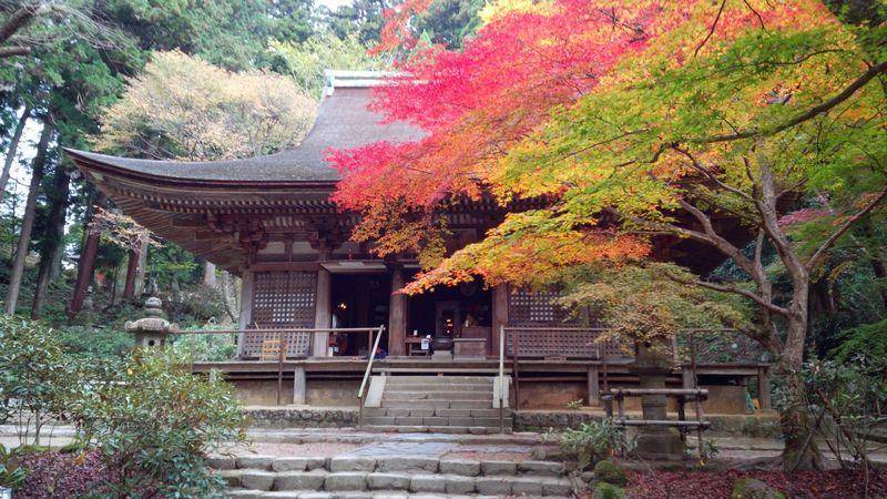 ●Main hall with maple trees photo by http://knyomfeelcam.blogspot.jp