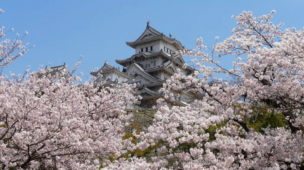 himeji-castle sakura