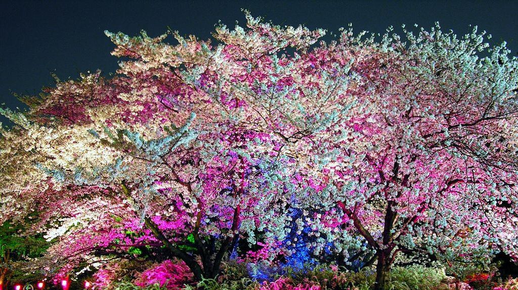 expo park sakura
