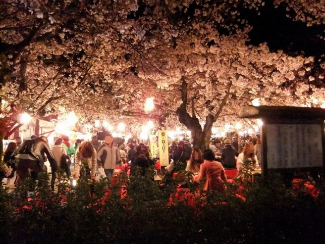 cheery blossom viewing party Maruyama park