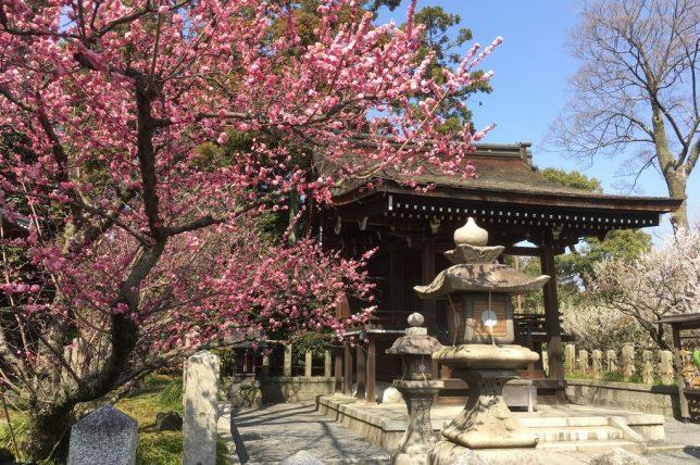 The sub shrine with plum trees