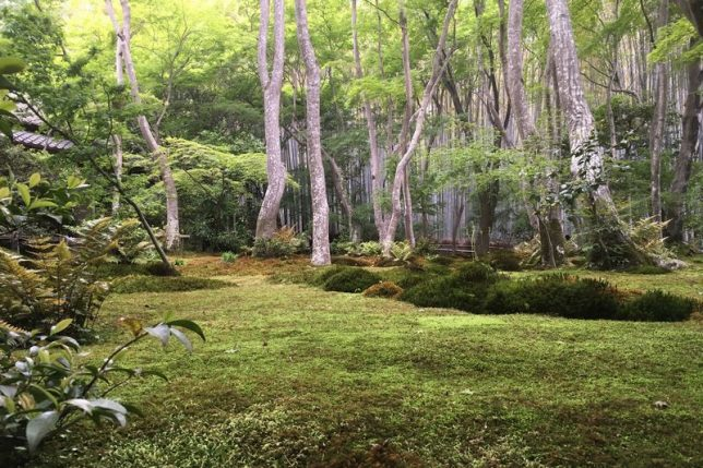 gio-ji mossy garden