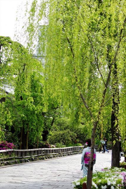 gion shirakawa willow