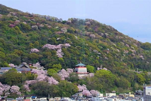 Kimii-dera Temple blossom