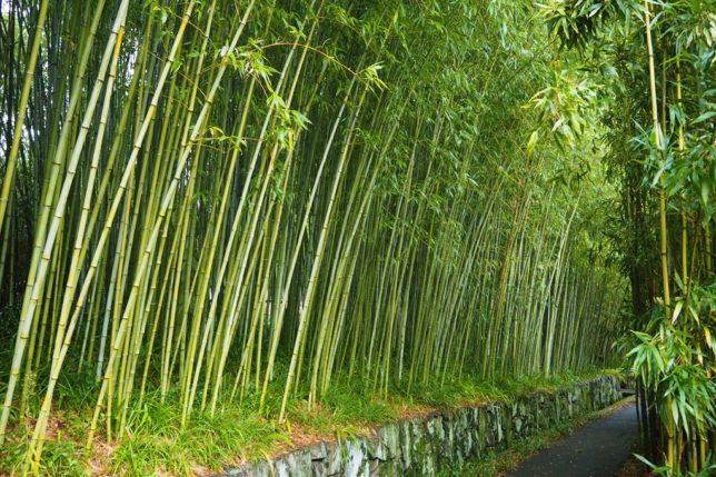 rakusai bamboo park