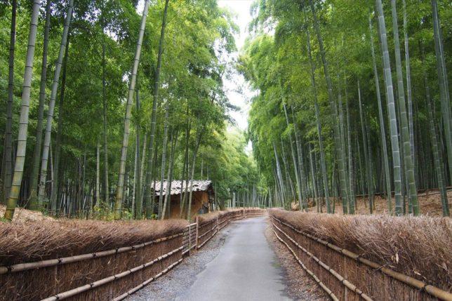rakusai bamboo path