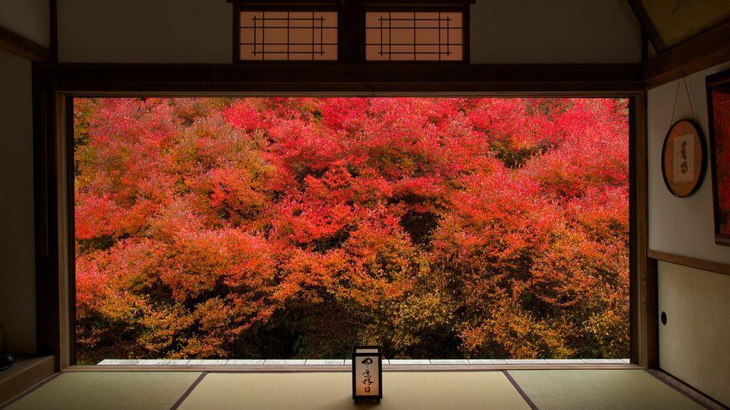 ankoku-ji temple