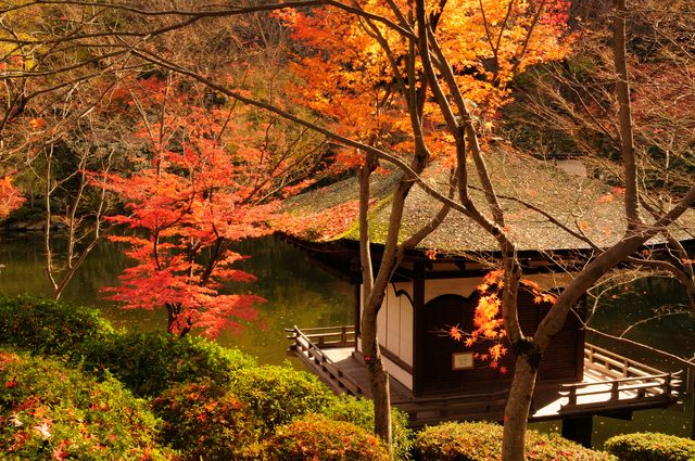 negoro-ji pond autumn