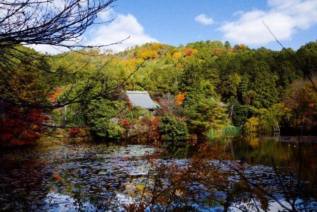 ryoan-ji pond