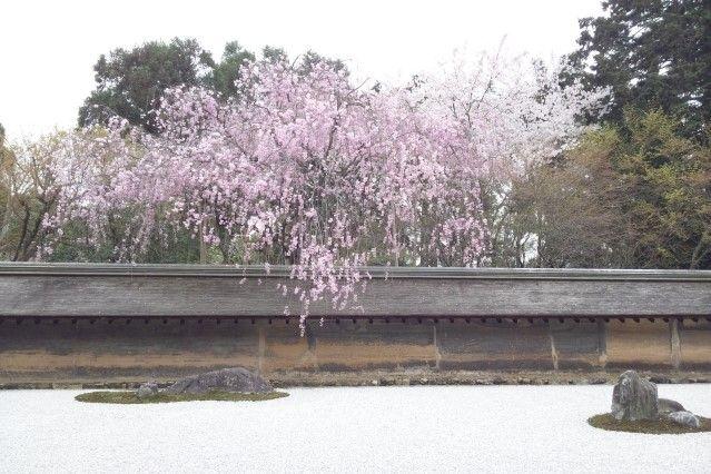 ryoan-ji cherry