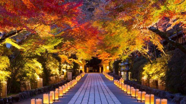 ishiyama-dera lit-up